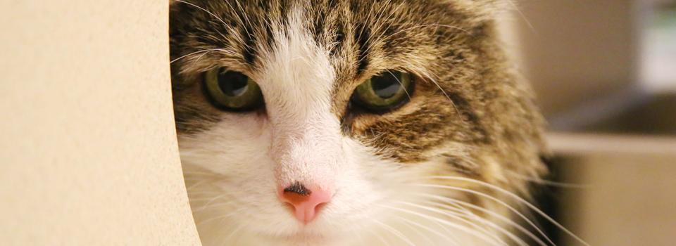 CatBanner3