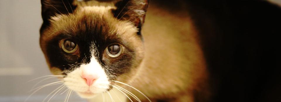 CatBanner5