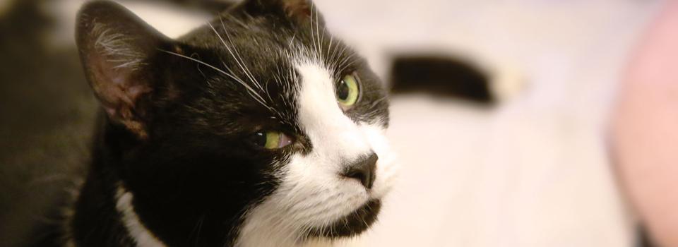 CatBanner6