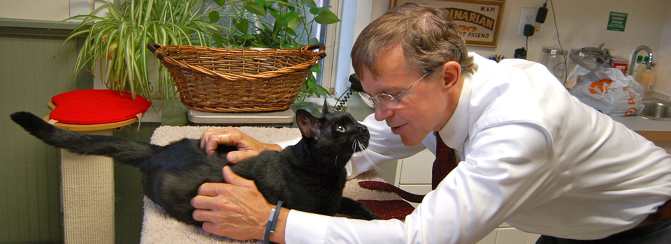 dr-peterson-exam-black-cat-bedford