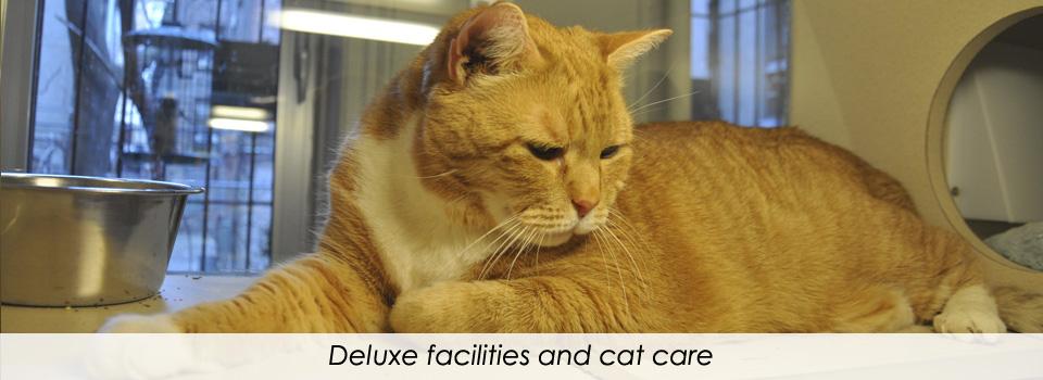 Deluxefacilities4